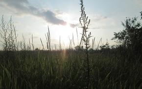 Картинка Закат, Небо, Трава, солнце - sun