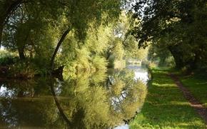 Картинка дорога, трава, парк, отражение, река, ива