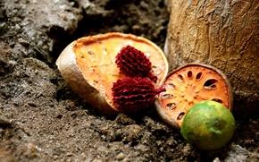 Обои плоды, земля, фрукты