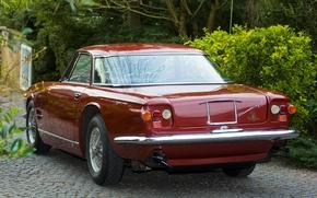 Картинка авто, деревья, Maserati, кусты, мазерати, 5000