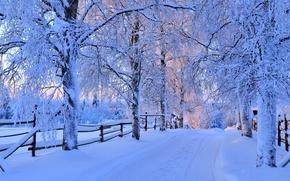 Обои snow, зима, дорога, white, sunset, path, trees, sky, лес, cool, снег, forest, природа, деревья, nice, ...
