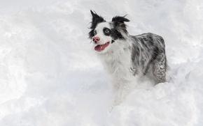 Обои собака, взгляд, зима, снег, друг