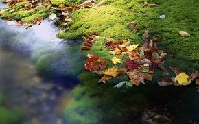 Картинка листья, ручей, япония