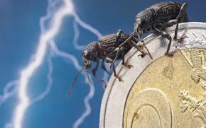 Обои макро, насекомые, молния, жуки, евро, парочка, монета, денежка, Скосарь одиночный, Долгоносики