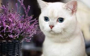 Картинка цветы, глаза, кот