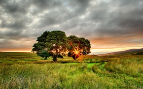 Картинка поле, лето, солнце, лучи, деревья, закат, Ирландия, два