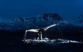 Картинка море, брызги, кит, хвост