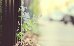 Обои цветы, фокус, незабудки, ограда, размытость, боке, забор, решетка