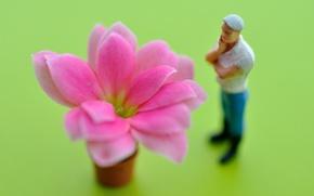 Картинка flower, petals, observer