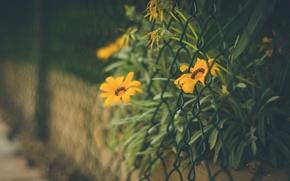 Картинка листья, цветы, оранжевый, фон, сетка, widescreen, обои, забор, размытие, ограждение, wallpaper, цветочки, flower, широкоформатные, flowers, ...