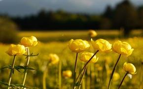 Картинка поле, лес, цветы, природа