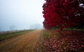 Картинка дорога, поле, осень, листья, деревья, туман, багрянец