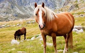 Картинка животные, трава, горы, камни, кони, лошади, обои от lolita777, пасутся