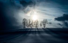 Картинка снег, ночь, лунный свет