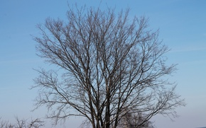 Картинка небо, деревья, ветки, деревня