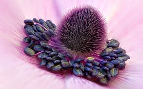 Картинка flower, stamens, anthers