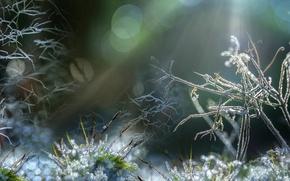 Картинка природа, фон, Frozen Macro World