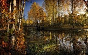 Картинка осень, лес, деревья, мост, желтые, речка