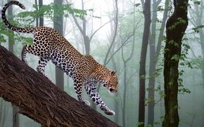 Обои лес, фотошоп, ветка, leopard