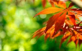 Картинка осень, макро, блики, листва, ветка