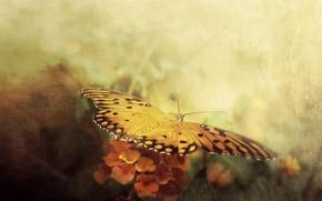 Картинка стиль, фон, бабочка