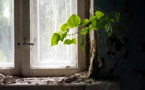 Обои окно, жизнь, ветка