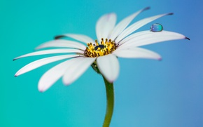 Картинка flower, drops, petals