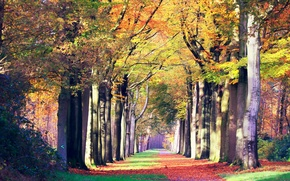 Картинка дорога, осень, пейзаж