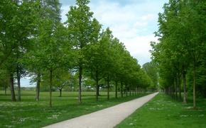 Картинка зелень, деревья, парк, дорожка, trees, Park