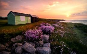 Картинка трава, солнце, пейзаж, цветы, восход, камни, остров, Англия, Портленд, хижины, Великобритания, Portland, flowers, England, Dorset, …