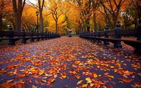 Картинка осень, парк, аллея, листопад, скамейки