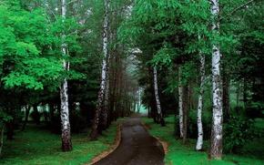 Картинка дорога, зелень, лес, деревья, природа, фото