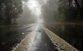 Картинка дорога, капли, дождь, мгла, rainy day