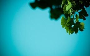Обои autumnness, тень, листья
