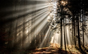 Картинка дорога, осень, лес, свет, утро