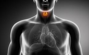 Картинка heart, lungs, organs, thyroid