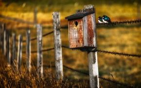 Картинка птицы, забор, домик