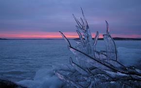 Обои ветка, вода, Лед, зима