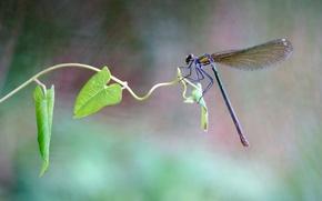 Картинка лето, листья, макро, стрекоза, насекомое, стебелек, обои от lolita777