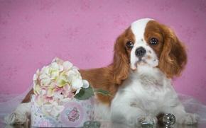 Картинка щенок, спаниель, пятнистый, гортензия