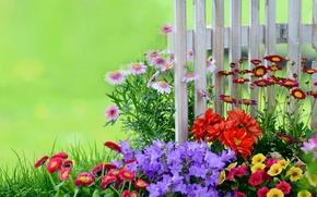 Обои забор, маргаритки, петунии, сад, колокольчики, клумба