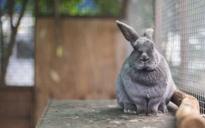 Картинка кролик, ушастик, в клетке