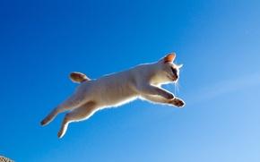 Картинка кошка, кот, прыжок, полёт