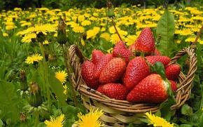Картинка цветы, ягоды, луг, клубника, одуванчики, корзинка