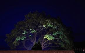 Картинка свет, пейзаж, ночь, дерево