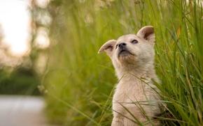 Картинка трава, милый, щенок