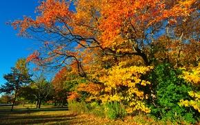 Картинка парк, небо, деревья, трава, осень, лес, листья