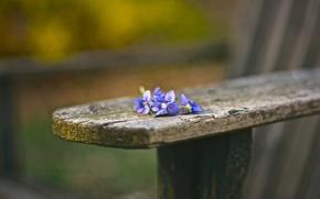 Обои цветы, скамья, фон