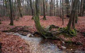 Картинка Вода, Осень, Лес, Fall, Листва, Water, Autumn, Forest, Leaves