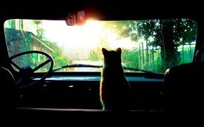 Картинка машина, дождь, Кошка